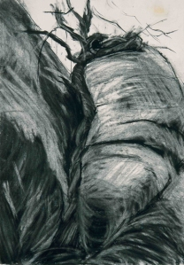 ROCK SKETCH II. Charcoal on paper, 42 x 29.5 mounted, glazed + frame. Private collection